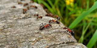 how do ants get into your home