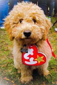 Charming Beanie Baby Dog Halloween Costume