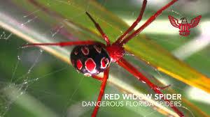 Spider Identification In Florida