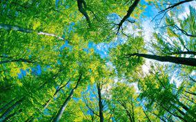 Trees Desktop Wallpapers - Top Free ...