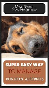 Dog Skin Allergies! This is a Super Easy Way To Manage Them | Dog ...