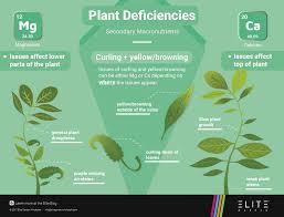 Plant Nutrient Deficiency Chart Secondary Common Plant Deficiencies Elite Garden