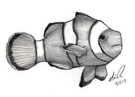 clown fish drawing. Exellent Drawing Line Drawing Clown Fish  Google Search To Clown Fish Drawing
