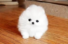 most beautiful puppies in the world. World Most Beautiful Puppy And Puppies In The