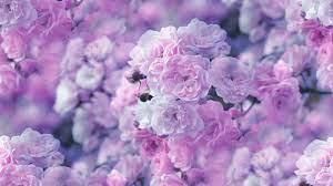 pink flowers hd wallpaper background