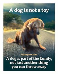Quotes About Pets And Friendship Awesome Quotes About Pets And Friendship 48 QuotesBae