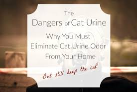 spectacular inspiration cat urine odor removal wood floors