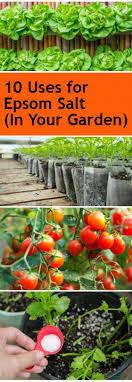 epsom salt gardening. 10-uses-for-epsom-salt-in-your-garden Epsom Salt Gardening