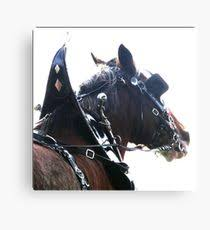 clydesdale horse from cart driver s view canvas print