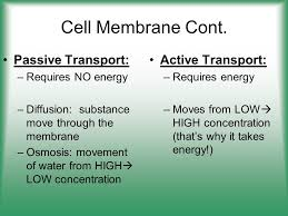 Active Vs Passive Transport Venn Diagram Passive Transport And Active Transport Venn Diagram Barca