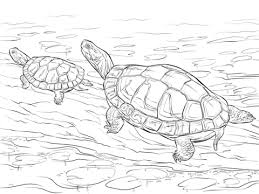 Small Picture Two Painted Turtles coloring page Free Printable Coloring Pages