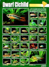 Aquarium Fish 87 Posters Rtoelle Telus Net Freshwater