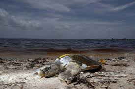 Should Travelers Visit Florida Beaches During A Red Tide