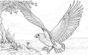 Small Picture Eagle Coloring Pages For Kids Archives Within Eagle Printable