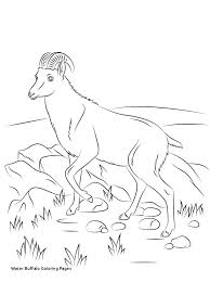 Wild Animal Coloring Pages Animals Free Printable Download Online