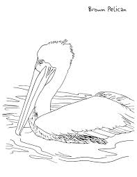 Small Picture Pelican Coloring Page for Kids Free Printable Picture