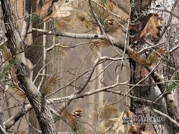high quality photo of realtree 1280x960