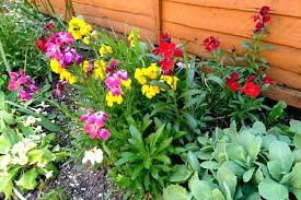 how to keep cats out of the garden. How To Keep Cats Off Garden The Wallflowers That I Planted . Out Of