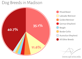 Madison Is A Big Dog Town Wiscontext