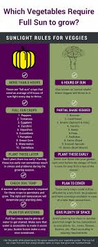 Vegetable Sunlight Requirement Chart Some Vegetable Crops Dont Require As Much Sunlight To