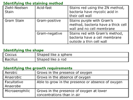 Gram Negative Bacteria Chart Basic Bacterial Identification Microbiology Teaching