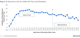 Investors Guide To Palm Oil Toptal