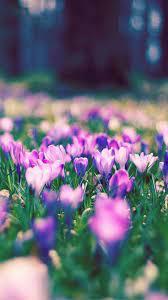 Nature Spring Purple Blossom Flower ...