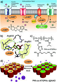 Camp Modulated Biomimetic Ionic Nanochannels Based On A Smart