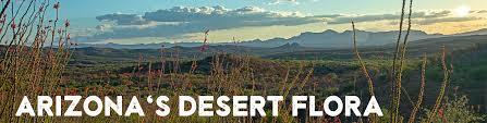Mountain standard time (no daylight savings time) elevation: Desert Plants Arizona State Parks