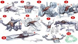 Chest Workout Chart Best Fitness Workout Healthy Body Fit