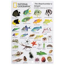 National In By 6 Fish - Beachcomber Guide com Devices Sports Id Amazon And Reef Of Outdoors To Card The Communication Florida Bahamas Caribbean Geographic In amp; 9 Diving