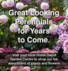 perennials vines