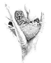 build a nesting structure for large owls
