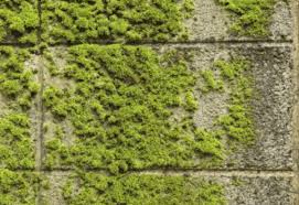 get rid of moss on a concrete patio