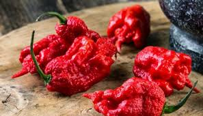 The 13 Hottest Peppers In The World 2019 Update