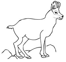 chamois animal coloring pages