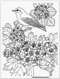 Realistic Bird Coloring Pages Bing Images Coloring Pages For