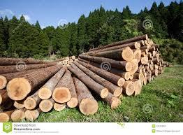 Risultati immagini per macchine per il taglio di alberi