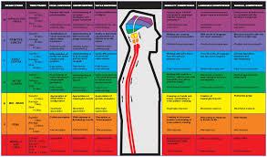 Whole Brain Child Chart Whole Brain Development Kaushalya Global