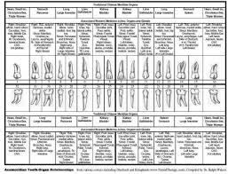 Tooth And Organ Chart Tooth Chart Tcm Chinese Meridian Tooth