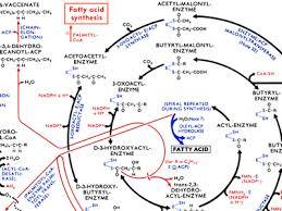 Metabolic Pathways Chart Visualcomplexity Com Metabolic Pathways