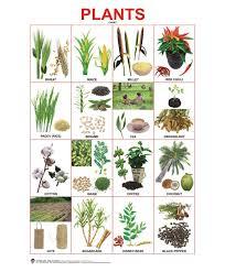 Plants Chart English