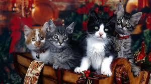 Cute Christmas Cat Desktop Wallpapers ...