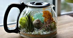 how to make your own terrarium. Brilliant How 13 DIY Ideas To Make Your Own Terrarium Intended How