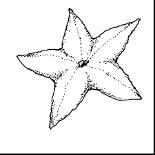 Small Picture awesome sea shell clip art with starfish coloring page