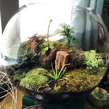humidity and plants carnivorous plants moss still want a fly trap high  humidity flowering plants