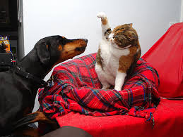 cats and dogs play fighting. Coworker Of Mine Recently Shared An Idea How She Breaks Up Her Cat And Dog When The Play Fighting Turns Blooddrawing Headinmouth Real Intended Cats Dogs