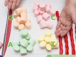 image titled make an edible dna model step 2