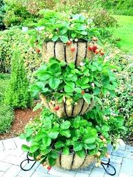 wooden crate planter how to grow a strawberry plant from best planters ideas on bo box