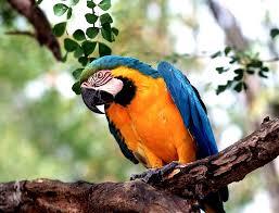 parrots for kids.  Kids Facts About Parrots For Kids Throughout Parrots For Kids